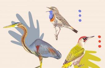 Év madara szavazás