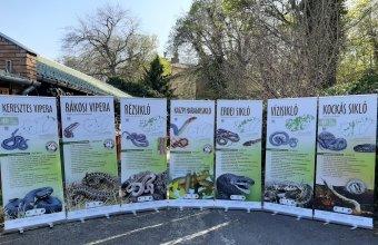 Magyarország kígyói vándorkiállítás tablói