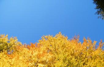 Őszi lombok (Fotó: Kerékgyártó Róbert).