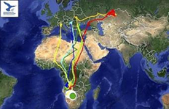 A kazah, magyar, olasz és román műholdas jeladós kék vércsék  vonulási útvonala 2014. december 7-éig (forrás: satellitetracking.eu).