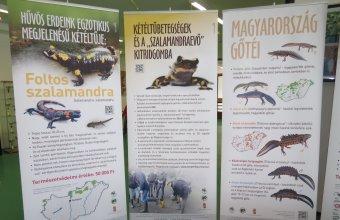Foltos szalamandra vándorkiállítás tablói