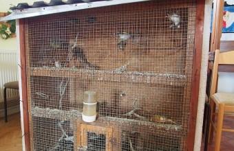 Lefoglalt madarak a kalitkában (Fotó: Laczik Dénes)