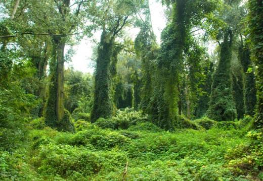 Ártéri erdő (Fotó: MME archívum)