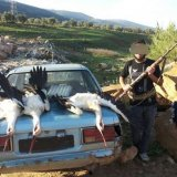 Egy, a Facebookra feltöltött képek közül, mely a gólyamészárlást ábrázolja