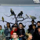 A bemutatóterem hátsó fala a hazai sasfajok törzsfájával (Fotó: Orbán Zoltán).