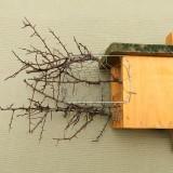 """Hagyományos """"C"""" típusú odú  drótháló- és töviseság-védelemmel ellátva talajközeli kihelyezéshez (Fotó: Orbán Zoltán)."""