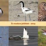 A 2019 év madara szavazás választható fajai: gólyatöcs, gulipán és nagy póling