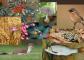 A 2021. év fajai (Fotók: MME archívum, Vadonleső, MHT, MMT, OEE)